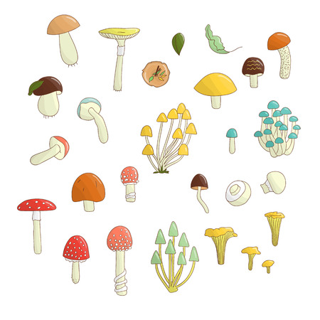Vector set of colored mushrooms. Collection of isolated bright aspen, orange-cup, champignon, chanterelle, toadstool, death cap, fungus. Food elements in cartoon style.