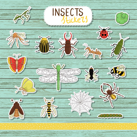 Vector set of colored insect stickers on blue wooden background. Collection of isolated on white background bright bee, bumble bee, may-bug, fly, moth, butterfly, caterpillar, spider, ladybug, ground, stag, potato, rhinoceros beetle, dragonfly, wasp, mosquito, worm, mantis, cobweb. Cartoon style.