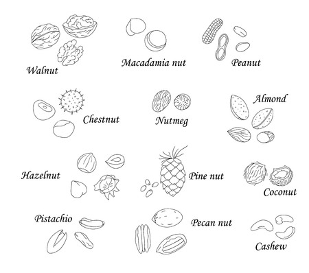 Vector set of black and white nuts. Collection of isolated monochrome hazel nut, walnut, pistachio, peanut, almond, coconut, pecan, pine nut, macadamia, cashew. Food illustration in cartoon or doodle style isolated on white Ilustração Vetorial