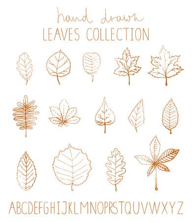 Vector set of hand drawn leaves isolated on white background. Monochrome pack of birch, maple, oak, rowan, chestnut, hazel, linden, alder, aspen, elm, poplar, willow, walnut, ash leaves. Cartoon style