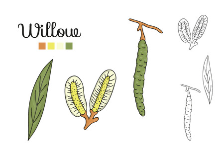 Vector set of willow tree elements isolated on white background. Botanical illustration of willow leaf, brunch, flowers, fruits, ament. Black and white clip art. Illustration