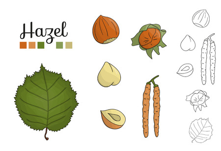 Vector set of hazel tree elements isolated on white background. Botanical illustration of hazel  leaf, brunch, flowers, nuts. Black and white clip art.