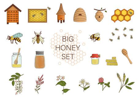 Vektorfarbenes Set aus Honig, Biene, Hummel, Bienenstock, Wespe, Bienenhaus, Wiesenblumen, Waben, Propolis, Glas, Löffel. Bunte Honigsammlung lokalisiert auf weißem Hintergrund. Vektorgrafik