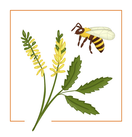 Vector illustration of colored melilot or sweet clover with bee. Bright colorful picture of wild flower. Good for organic natural design. Watercolor effect.