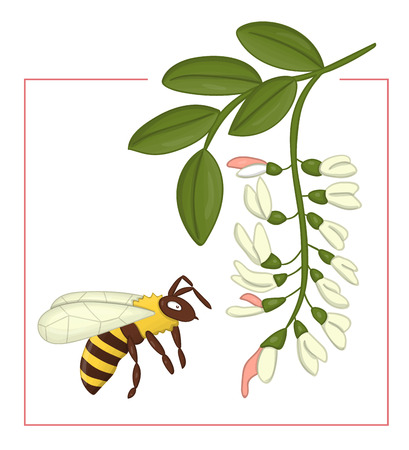 Vector illustration of colored acacia with bumblebee. Bright colorful picture of wild flower. Good for organic natural design. Watercolor effect. Illustration