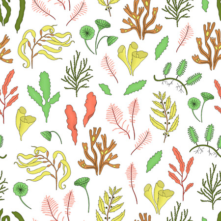Vector colored seamless pattern of seaweeds. Colorful repeating background with laminaria, focus, macrocystis,sargassum, padina, dasya, porphyra, phyllophora, cladophora, ulva, acetabularia.