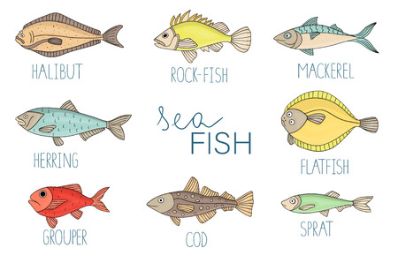 Vector colored set of fish. Collection of with halibut, rock-fish, mackerel, herring, flatfish, sprat, grouper, cod. Underwater illustration