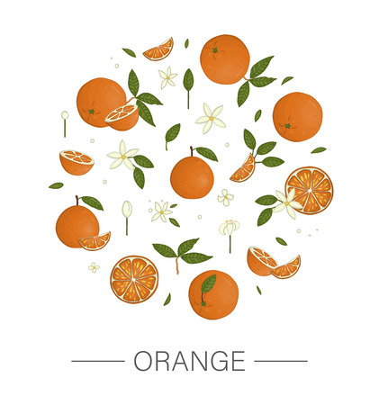 Vector  colored set of oranges framed in circle isolated on white background . Colorful collection of citrus fruit, leaves, flowers, twigs. Fresh food illustration