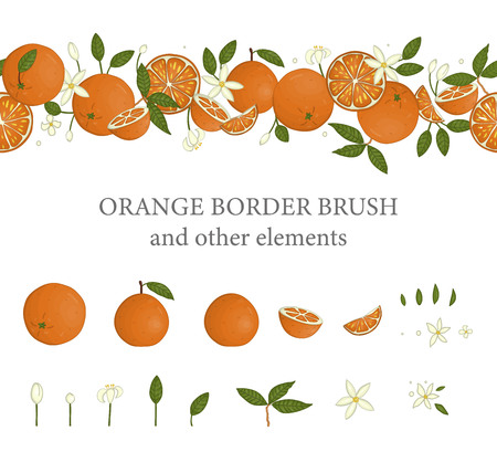Vector  border brush with oranges and orange design elements. Repeat border pattern with citrus fruit, leaves, flowers, twigs. Fresh food illustration.