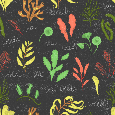 Vector colored seamless pattern of seaweeds isolated on black textured background. Colorful repeating marine background. Underwater vintage illustration 일러스트
