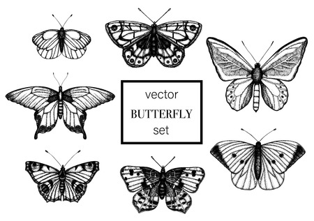 Vector set of hand drawn black and white butterflies. Engraving retro illustration. Realistic insects isolated on white background. Detailed graphic drawing in vintage style Ilustração
