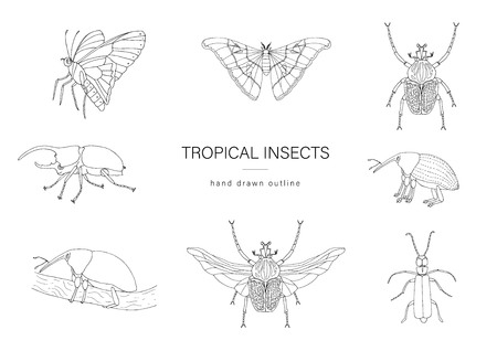 Vector set of tropical insects. Hand drawn outline of atlas moth, weevil, butterfly, goliath, Hercules beetle, Spanish fly. Black and white collection of tropic bugs
