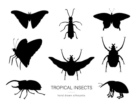 Vector set of tropical insects. Hand drawn black silhouettes of atlas moth, weevil, butterfly, goliath, Hercules beetle, Spanish fly. Set of tropic bugs  outlines