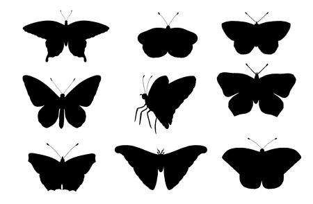 Vector set of butterflies. Hand drawn black silhouettes of atlas moth, weevil, butterfly, goliath, Hercules beetle, Spanish fly. Set of tropic bugs  outlines Illustration