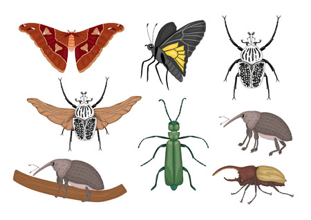 Vector set of tropical insects. Hand drawn colored atlas moth, weevil, butterfly, goliath, Hercules beetle, Spanish fly. Colorful cute collection of tropic bugs.