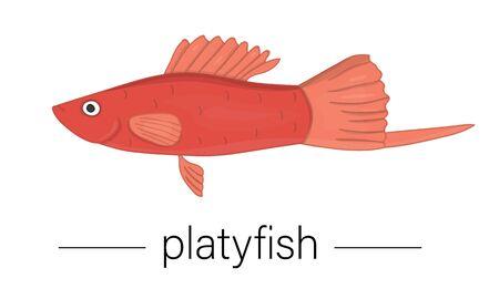Vector colored illustration of aquarium fish. Cute picture of platyfish for pet shops or children illustration