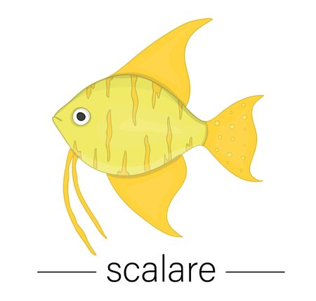 Vector colored illustration of aquarium fish. Cute picture of scalare for pet shops or children illustration