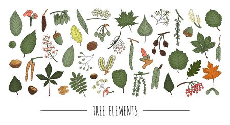 Vector set of colored tree elements isolated on white background. Colorful pack of birch, maple, oak, rowan, chestnut, hazel, linden, alder, aspen, elm, poplar, willow, walnut, ash leaves. Cartoon style
