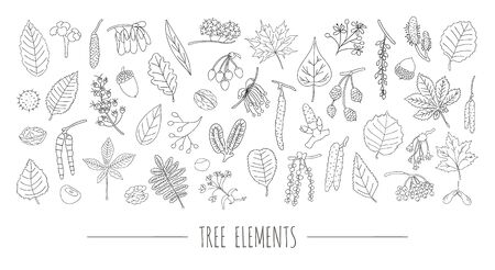 Vector set of black and white tree elements isolated on white background. Colorful pack of birch, maple, oak, rowan, chestnut, hazel, linden, alder, aspen, elm, poplar, willow, walnut, ash leaves. Cartoon style