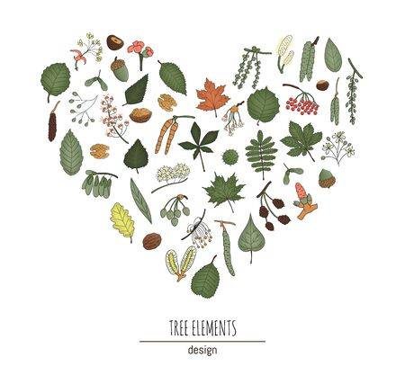 Vector set of colored tree elements isolated on white background framed in heart shape. Colorful pack of birch, maple, oak, rowan, chestnut, hazel, linden, alder, aspen, elm, poplar, willow, walnut, ash leaves. Cartoon style forest concept