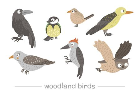 Vector set of cartoon style hand drawn flat funny cuckoos, woodpeckers, owls, raven, wren. Cute illustration of woodland birds for children's design.
