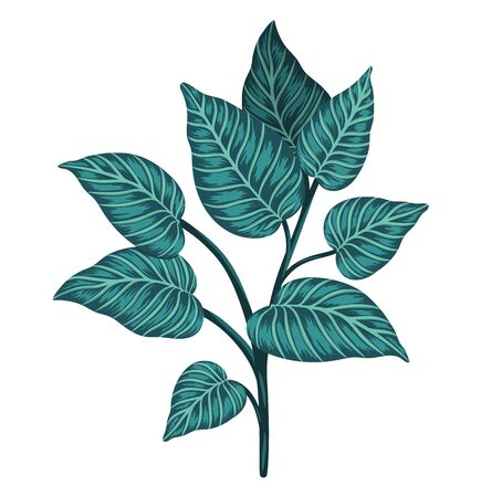 Vector tropical plant clip art. Jungle foliage illustration. Hand drawn exotic leaves isolated on white background. Bright realistic watercolor style picture.  Иллюстрация