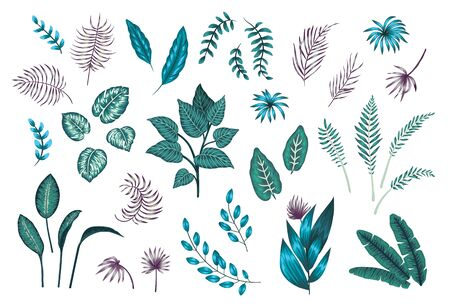 Vector set of tropical plants and leaves. Exotic jungle illustration with exotic greenery. Collection of jungle branches in purple and emerald green colors