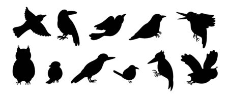 Vector set of cartoon style hand drawn flat funny cuckoos, woodpeckers, owls, raven, wren silhouettes. Cute black and white illustration of woodland birds for children's design.