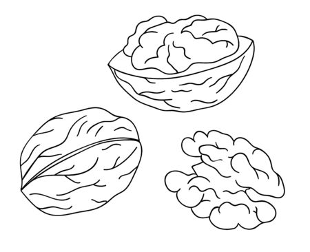 Vector black and white walnut icon. Set of isolated monochrome nuts. Food line drawing illustration in cartoon or doodle style isolated on white background.