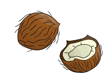 Vector colored coconut icon. Set of isolated monochrome nuts. Food line drawing illustration in cartoon or doodle style isolated on white background.