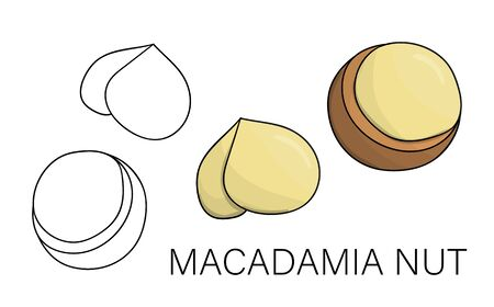 Vector black and white and colored macadamia icon. Set of isolated nuts. Food illustration in cartoon or doodle style isolated on white background.