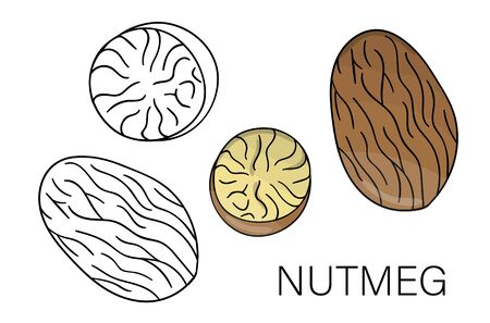 Vector black and white and colored nutmeg icon. Set of isolated nuts. Food illustration in cartoon or doodle style isolated on white background.