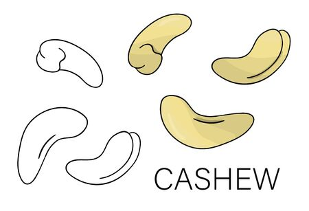 Vector black and white and colored cashew icon. Set of isolated nuts. Food illustration in cartoon or doodle style isolated on white background.