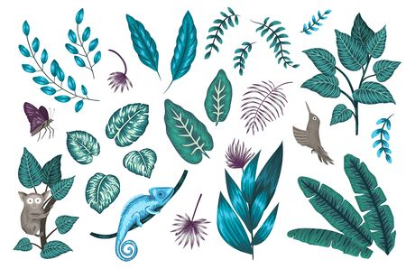 Vector set of tropical plants, insects and animals. Exotic jungle illustration with chameleon, tarsier, bird of paradise, butterfly isolated on white background.