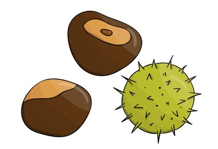 Vector colored chestnut icon. Set of isolated monochrome nuts. Food line drawing illustration in cartoon or doodle style isolated on white background.  イラスト・ベクター素材