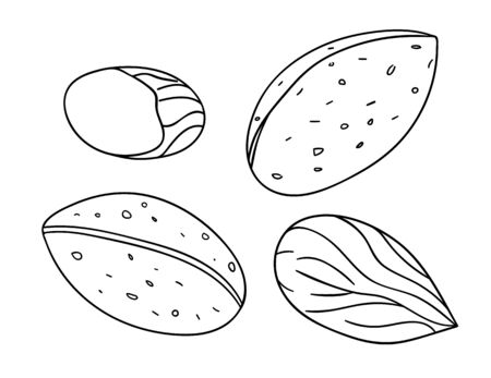 Vector black and white almond icon. Set of isolated monochrome nuts. Food line drawing illustration in cartoon or doodle style isolated on white background.