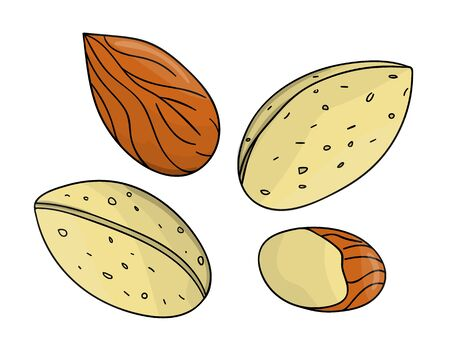 Vector colored almond icon. Set of isolated monochrome nuts. Food line drawing illustration in cartoon or doodle style isolated on white background.