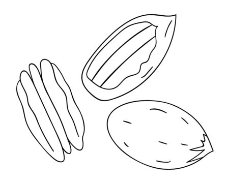 Vector black and white pecan icon. Set of isolated monochrome nuts. Food line drawing illustration in cartoon or doodle style isolated on white background.