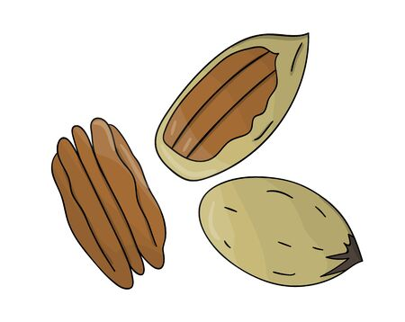 Vector colored pecan icon. Set of isolated monochrome nuts. Food line drawing illustration in cartoon or doodle style isolated on white background.