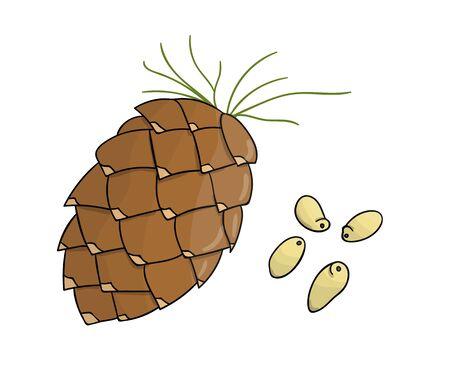 Icône de pignon de couleur de vecteur. Ensemble de noix monochromes isolées. Illustration de dessin au trait alimentaire en style cartoon ou doodle isolé sur fond blanc.