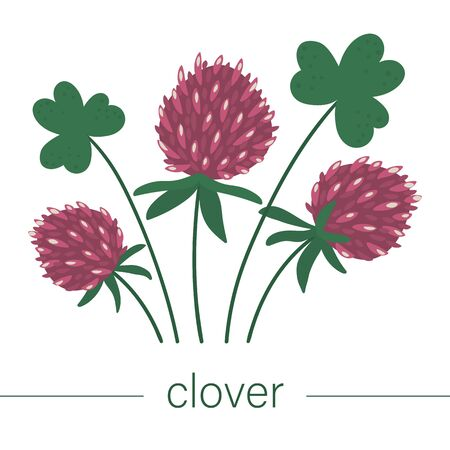 Vector flat clover illustration. Cute spring flowers. First blooming plants. Floral clip art isolated on white background.