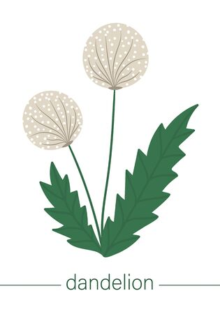 Vector flat dandelion illustration. Cute spring flowers. First blooming plants. Floral clip art isolated on white background.