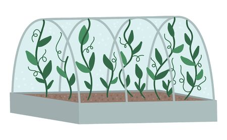 Vector greenhouse with green climbing plants. Flat hot house illustration isolated on white background. Side view greenroom picture. Spring garden illustration.