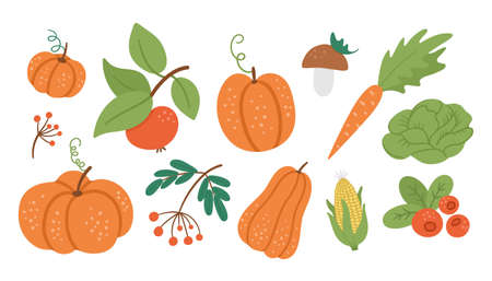 Vector set of cute autumn vegetables, fruit and berry. Flat style collection with pumpkins, carrot, apple, cabbage, corn, cranberry, mushroom. Funny fall harvest illustration isolated on white background