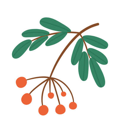 Vector cute twig with red berries. Autumn mountain ash branch. Funny flat style illustration isolated on white background. Forest food icon. Rowan tree fruit Vettoriali