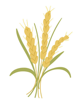 Vector cute autumn cereals bouquet. Flat style crop bunch. Funny fall grain illustration isolated on white background
