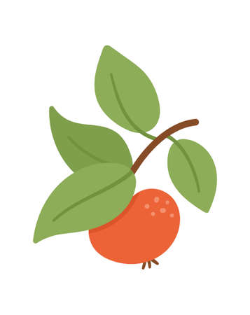 Vector cute apple twig with leaves. Autumn fruit icon. Funny flat style illustration isolated on white background. Garden harvest clipart