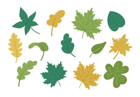 Vector set of cute autumn leaves. Flat style collection with fall greenery. Funny falling maple, oak, chestnut leaf illustration isolated on white background
