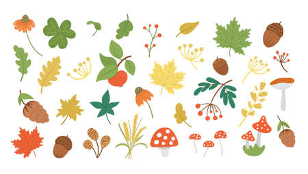 Vector set of cute autumn herbs, plants, flowers, berries. Flat style collection with leaves, apple, acorns, cones. Funny fall greenery illustration isolated on white background Vettoriali