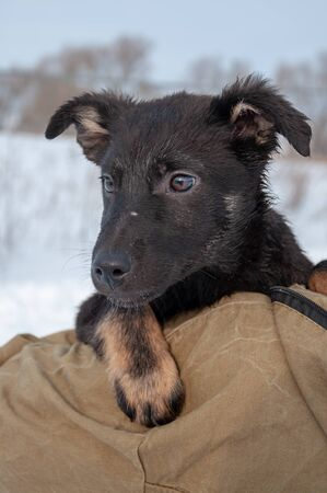 Expressive portrait of a cute black puppy with sad eyes on a beautiful winter day against the background of fresh fluffy snow in the countryside.